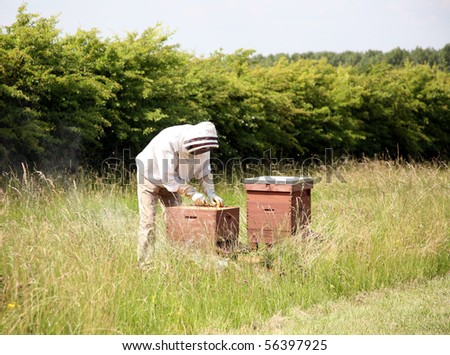 Beekeeper - stock photo