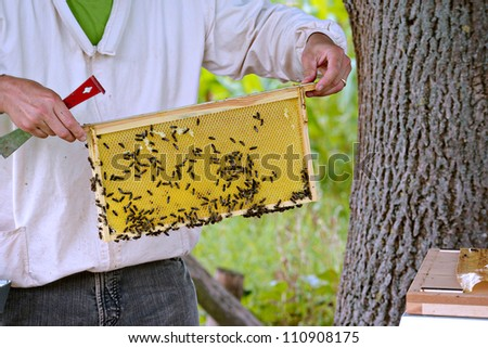 Beekeeper checking a frame of honey bees from the hive - stock photo