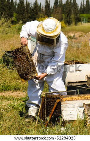 Beekeeper holding a honeycomb - stock photo