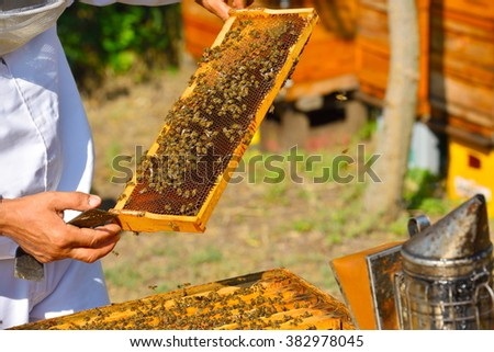Beekeeper holding frame of honeycomb with working bees outdoor - stock photo