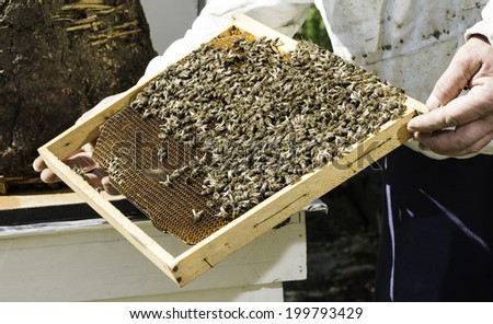 Beekeeper look honeycombs. White protective clothing - stock photo