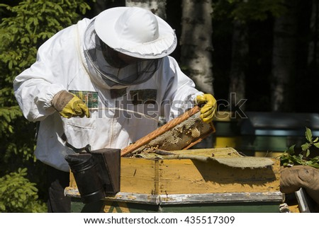 Beekeeper on apiary. Beekeeper pulling frame from the hive