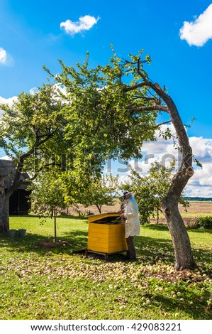 Beekeeper prepares remove honey from the beehive,  man  looks after bees ,yellow beehive in the garden near apple tree, beehive and beekeeper in the nature background, beekeeping, sericulture concept  - stock photo
