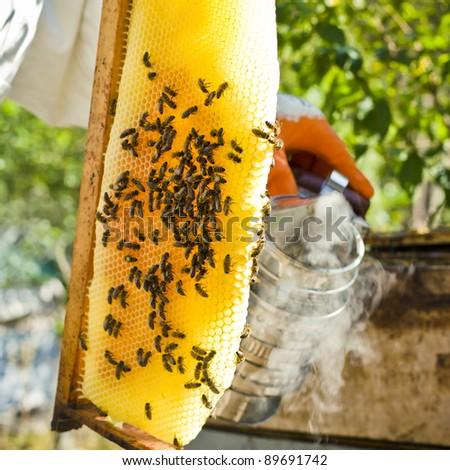 Beekeeper with honeycombs & smoker - stock photo