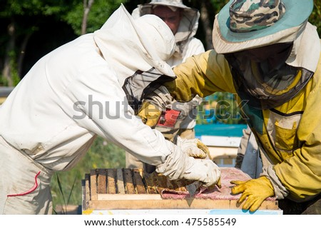 beekeepers work on an apiary. People in overalls in the hive