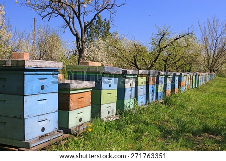 Beekeeping, bees and hives in a row in the orchard - stock photo