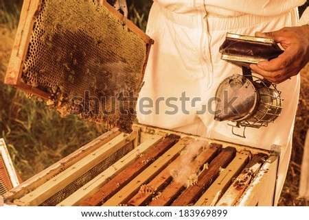 Beekeeping tool - stock photo