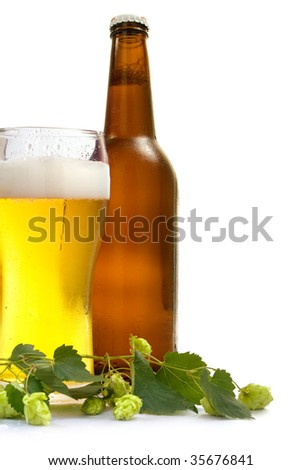 beer and branch of hop - stock photo