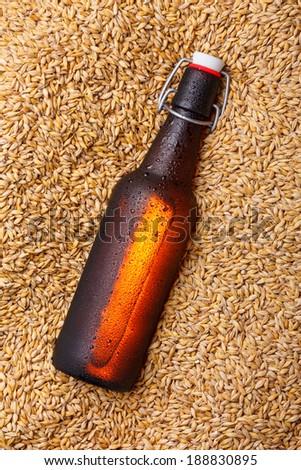 Beer bottle on the beer barley - stock photo