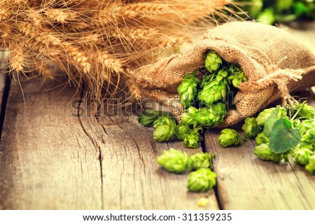 Beer brewing ingredients Hop in bag and wheat ears on wooden cracked old table. Beer brewery concept. Hop cones and wheat closeup. Sack of hops and sheaf of wheat on vintage background.  - stock photo