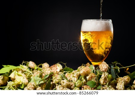 Beer flowing in glass with hop grapes