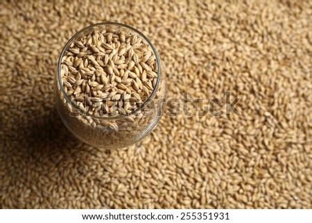 Beer glass full of barley malt standing on malt grains - stock photo