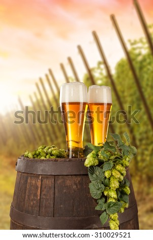 Beer glass served on wooden desk with keg. Hop-field on background - stock photo