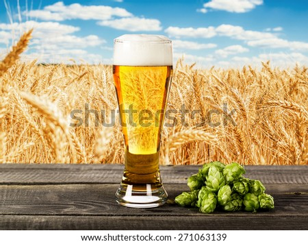 Beer glass with hops on the against a wheat field - stock photo