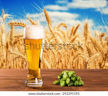 Beer glass with hops on the wood table against a wheat field - stock photo