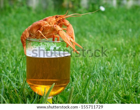 Beer with crayfish in green grass  - stock photo