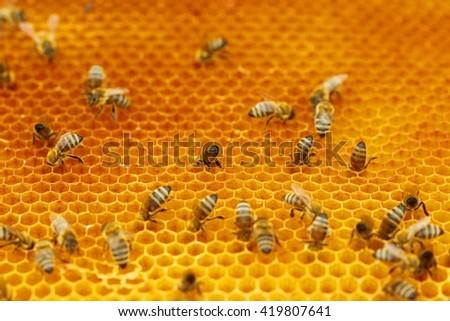 Bees - stock photo