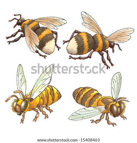 Bees and bumblebees on a white background - stock photo