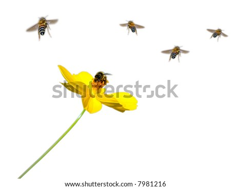 bees and flower