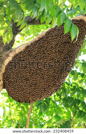 Bees and its hive on a tree - stock photo