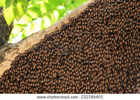 Bees and its hive on a tree