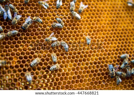 Bees are sitting on the bee honeycombs. Bees make honey. - stock photo