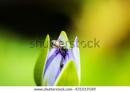 Bees are social animals Strength, patience , diligence Sting with a deadly weapon . I got a bee sting is swelling . - stock photo