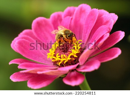 Bees at flower at work - stock photo