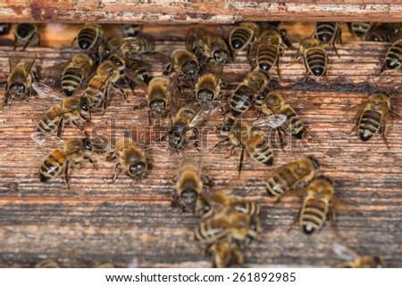 Bees at old hive entrance - stock photo