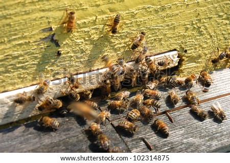 Bees at the entrance of a beehive - stock photo