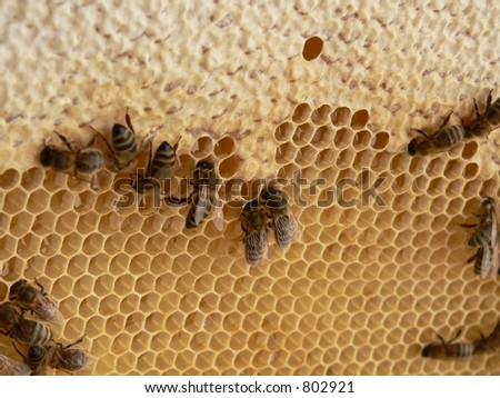 Bees babys in honey cells - stock photo