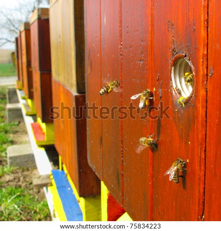 Bees carrying pollen back to hive. - stock photo