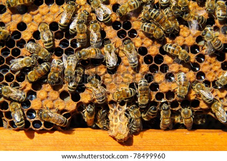 Bees destroy the hostess of family cocoonr. They destroyed an extra hostess of family.