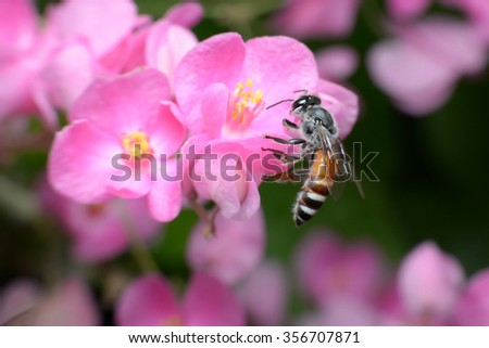 Bees feed from flowers and mix carpel.