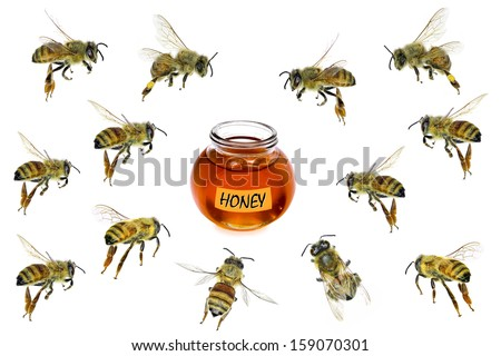 Bees flying to honey glass isolated on a white background - stock photo