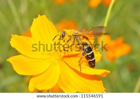 Bees gather nectar - stock photo