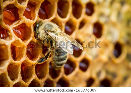 Bees in a beehive on honeycomb - stock photo