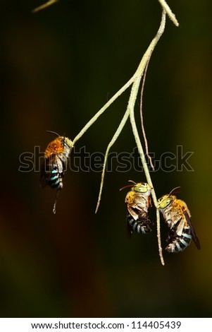 Bees on a branch. - stock photo