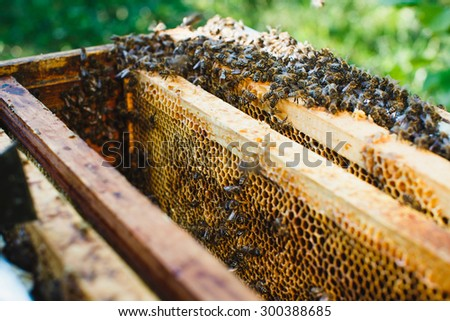 Bees on beehive with differed kinds of wooden frames of honeycomb inside, on the green background, close up - stock photo