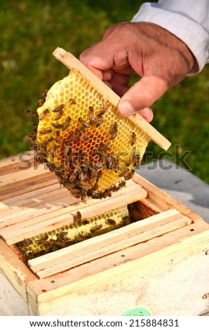 bees on small wedding honeycomb held by apiarist - stock photo