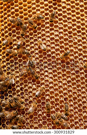 Bees sit on honeycombs with honey - stock photo