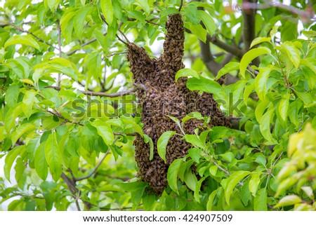 Bees swarm flown away - stock photo