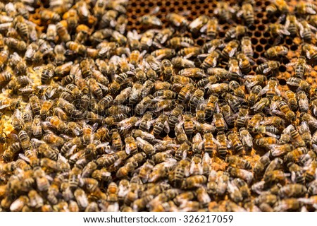 Bees swarming on a honeycomb - stock photo