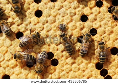 bees swarming on a honeycomb, close up view of the working bees on honey cells - stock photo