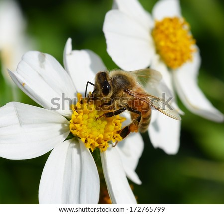 Bees to a flower. - stock photo