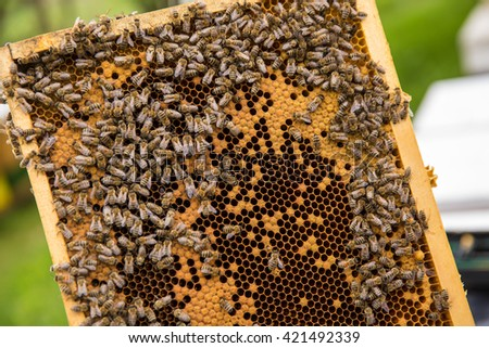 bees work on honeycomb collecting honey - stock photo