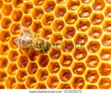 bees work on honeycomb. Honey cells pattern. - stock photo