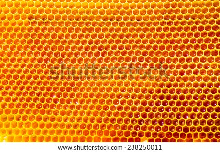 bees work on honeycomb with sweet honey - stock photo