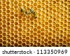 bees work on honeycombs with sweet honey - stock photo
