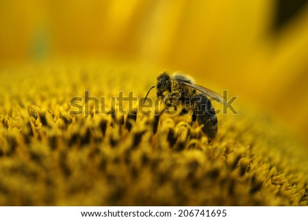 bees working at pollination